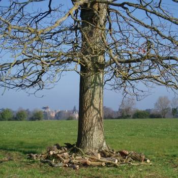 Westonbirt - Tree Parts
