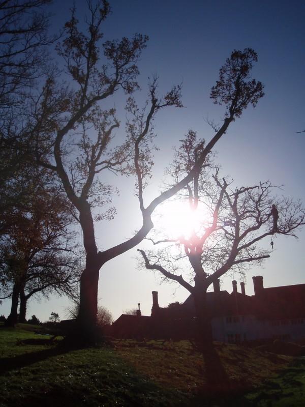 Marsh Court - Tree Parts