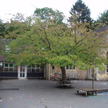 Nailsea Primary School - Tree Parts