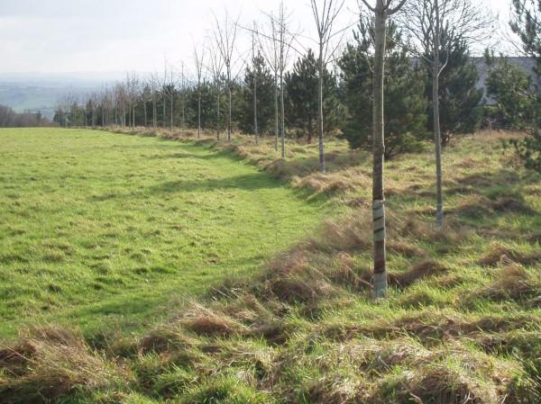Calonder Landscape Architects - Tree Parts