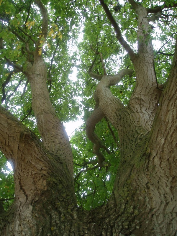 St Catherines Court - Tree Parts